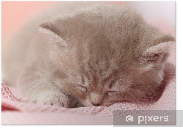 Poster Sleeping kitten - Mammifères