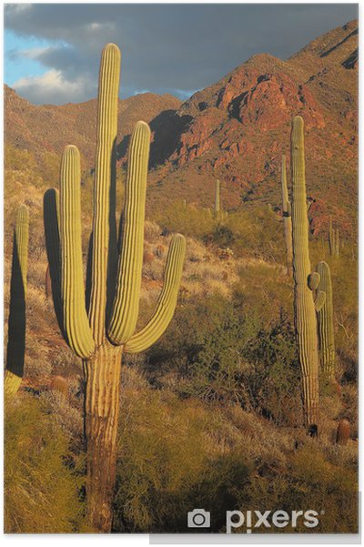 Poster Sonoran ökenlandskap och kaktus detaljer - Amerika