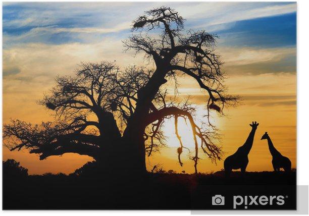 Poster Spectaculaire coucher de soleil africain avec Baobab et Giraffe - Thèmes