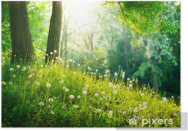 Spring Nature. Beautiful Landscape. Green Grass and Trees Poster - Destinations