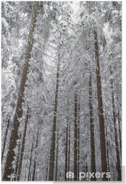 Póster Spruce árbol en la nieve bosque - Estaciones