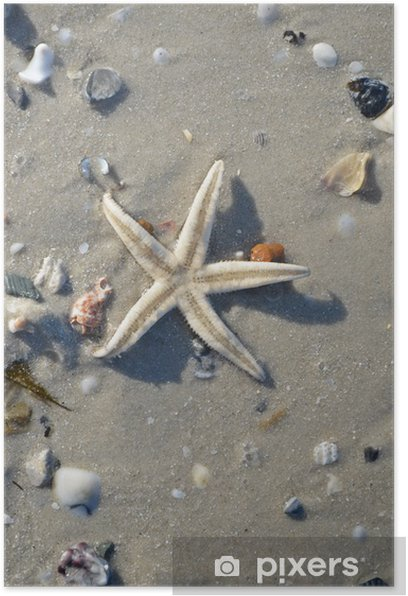 starfish on the beach Poster - Aquatic and Marine Life