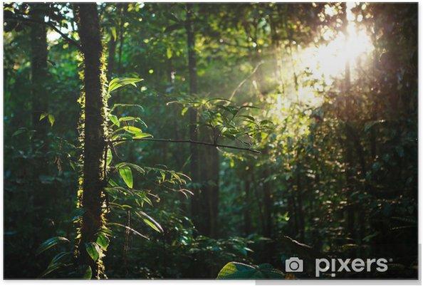 Poster Stralen van de zon diep in het regenwoud - Thema's