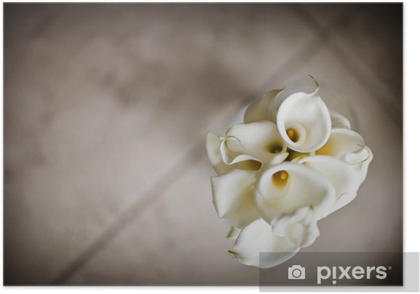 Strauß Callas, geringe Schärfentiefe Poster - Flowers
