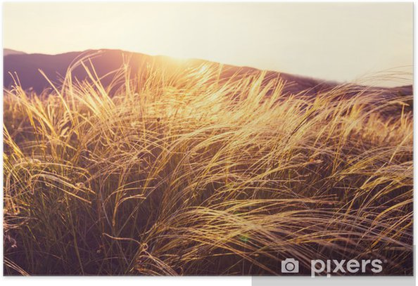 Poster Summer meadow - Agriculture