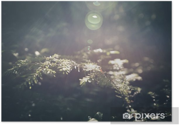 Sunlit Pine Needles Poster - Plants and Flowers
