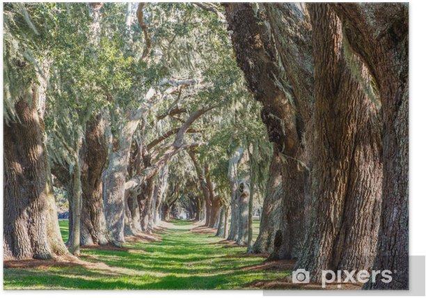 Sunny Green Path Between Oak Trees Poster - Criteo