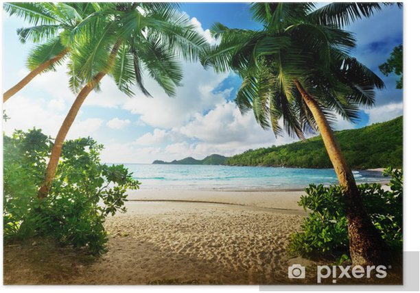 Sunset in the Seychelles Poster - Palm trees