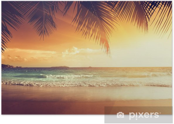 sunset on the beach of caribbean sea Poster - Palm trees