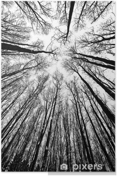 Poster Svarta och vita träd silhuetter - Stilar