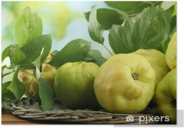sweet quinces with leaves, on wooden table, on green background Poster - Fruit