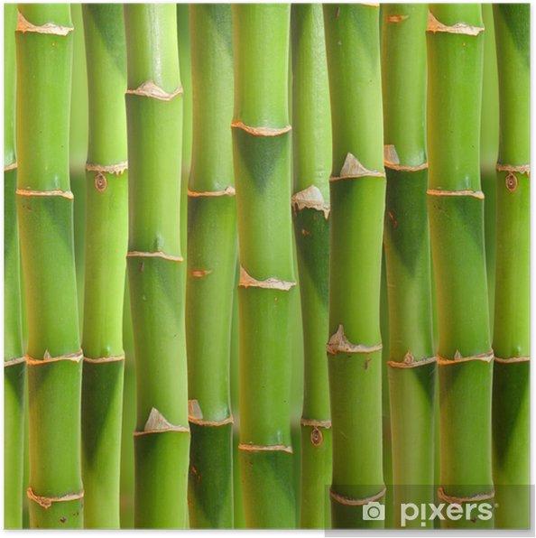 Póster Tallos de bambú de fondo. - iStaging