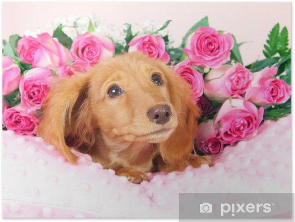 Bed Met Rozen.Poster Teckel Pup Op Een Bed Van Rozen Pixers We Leven Om Te