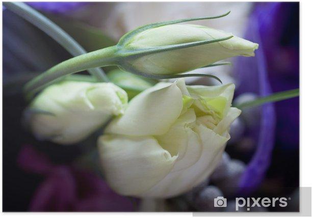 Tender roses Poster - Flowers
