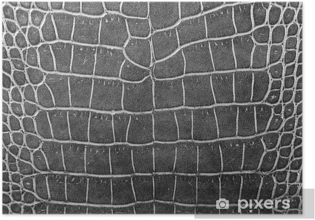 Poster Texture de la peau de crocodile noir - Ecologie