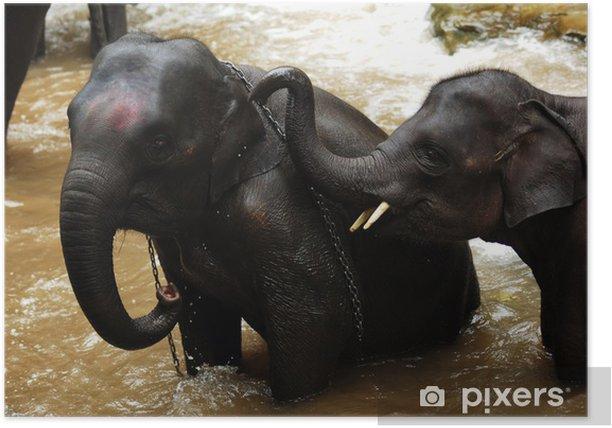 Poster Thaïlande, Chiang Mai: baignade des éléphants - Asie