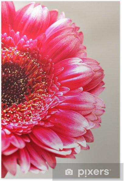 The pink gerber close up Poster - Seasons