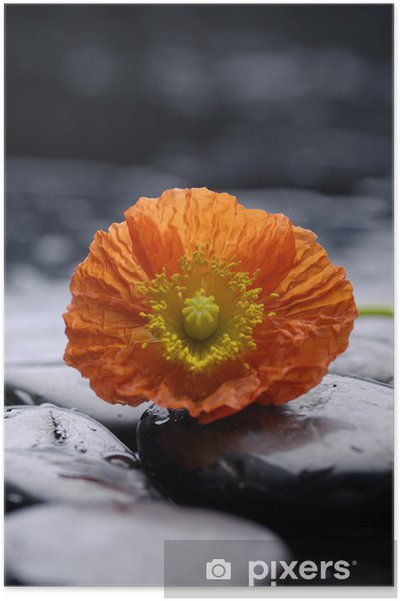 Therapy Stones And Red Poppy Flower Poster Pixers We Live To Change