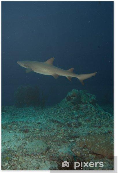 Poster Tiburon - Sous l'eau