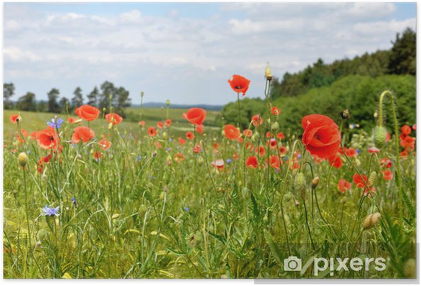 Poster Tiefroter Mohn - Campagne