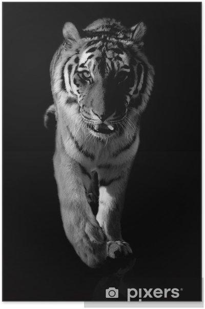 Poster Tiger svartvit - Teman