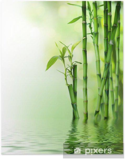 Poster Tiges de bambou sur l'eau - Styles