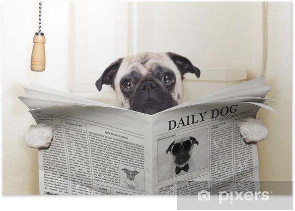 Poster Toilette de chien - Carlins