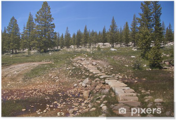 Poster Traînée par Soda Springs, bouillonnement de l'eau froide, Yosemite NP - Amérique