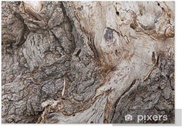 tree bark Poster - Textures