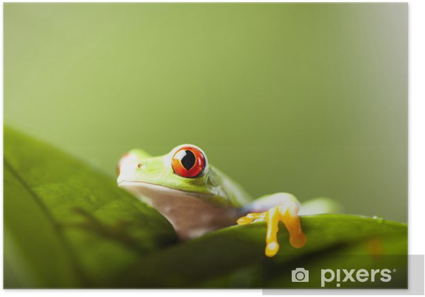 Tree frog Poster - Other Other