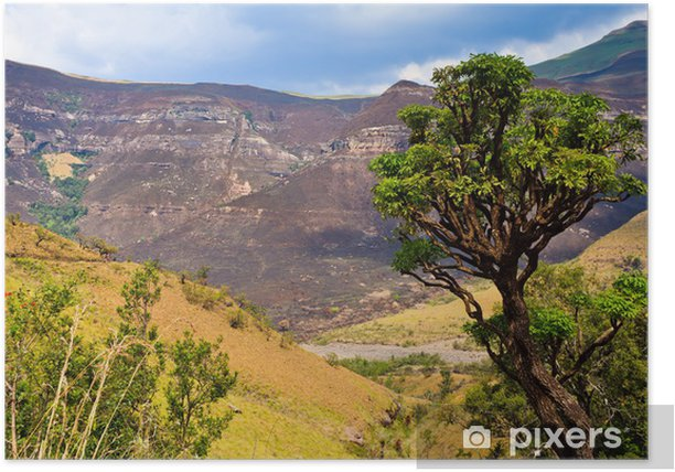 Tree in a mountain landscape Poster - Mountains