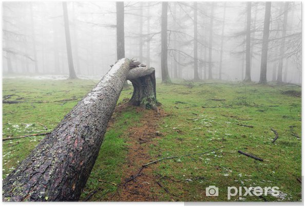 Poster Tronc d'arbre tombé - Forêt