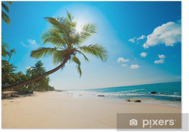 Tropical beach in the sun Poster - Maldives