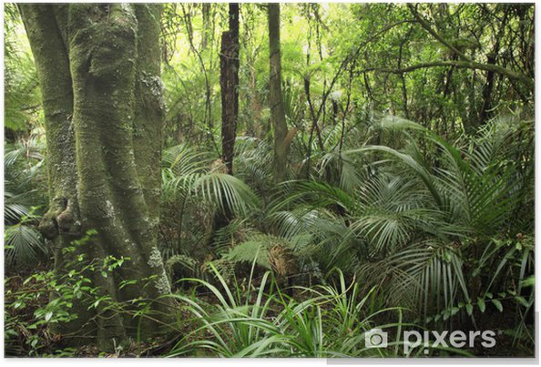 Póster Tropical forest - Temas