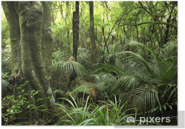 Tropical forest Poster - Themes