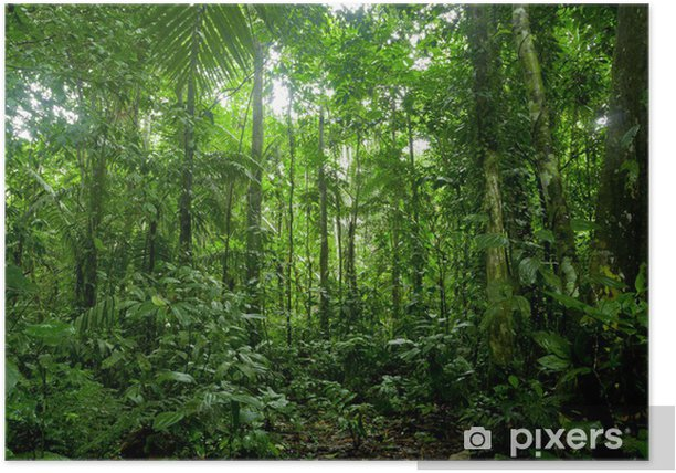 Tropical Rainforest Landscape, Amazon Poster - Themes