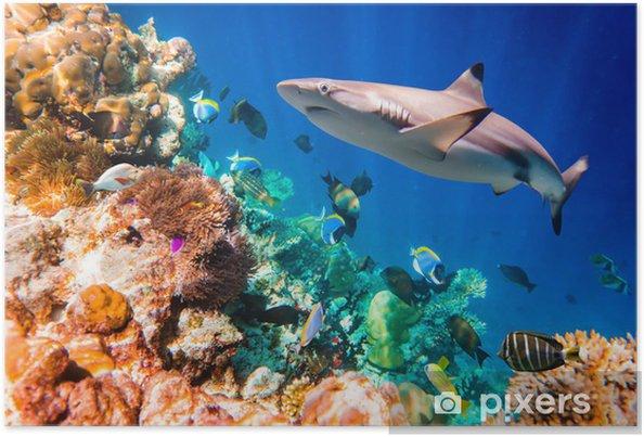 Poster Tropisch koraalrif - Haaien