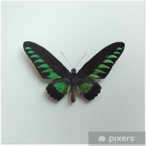 Poster Tropische vlinder - Dieren
