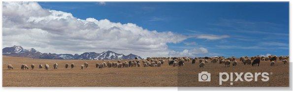 Poster Troupeau de moutons au Tibet - Asie