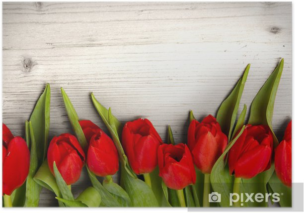 Tulip bouquet Poster - Themes