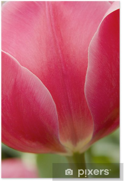 Poster Tulipe rouge - Agriculture