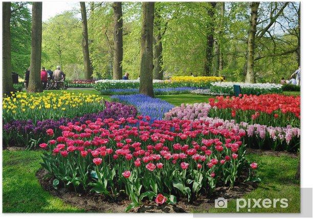 Poster ,, Tulipes bleues, roses et blanches jaunes pourpres dans le parc de Keukenhof - Fleurs