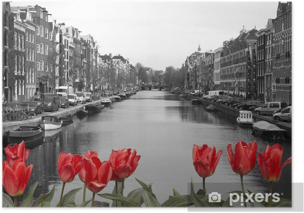 Poster Tulipes rouges dans amsterdam - Pays-Bas