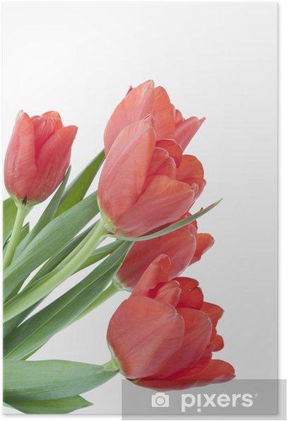 Tulpenstrauß Poster - Flowers