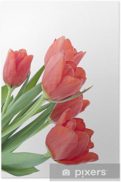 Poster Tulpenstrauss - Fleurs