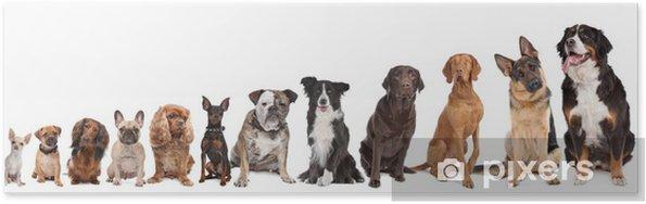 Poster Twaalf honden in een rij - Muursticker