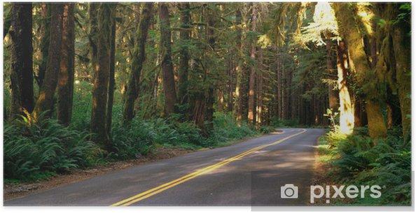 Poster Twee baans weg snijdt door het regenwoud - Bomen