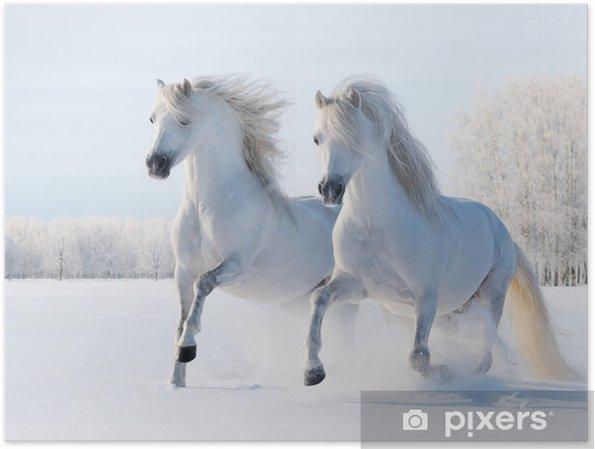 Poster Twee witte paarden in galop in de sneeuw - Stijlen