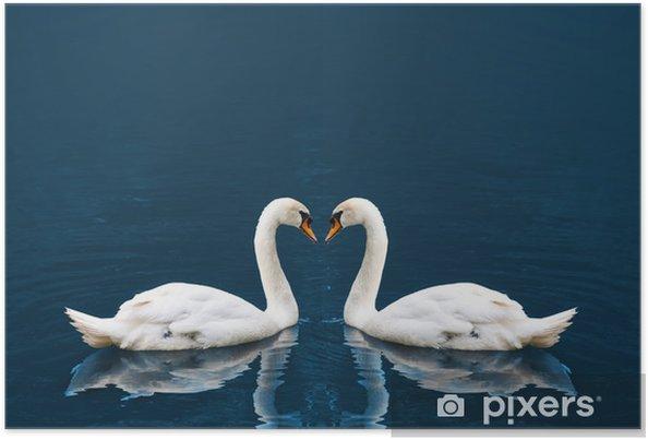 Poster Twee witte zwaan - Zwanen