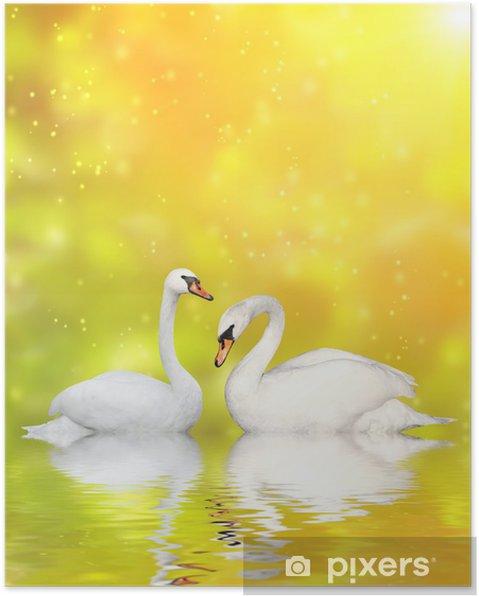 Poster Twee zwanen - Zwanen